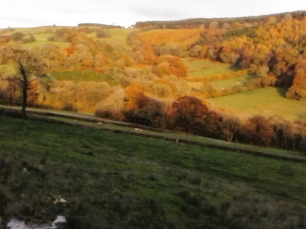 Autumn at The Byre…………..